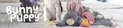 Bunny Puppy